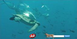 Ask.com crawl