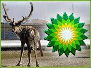 bp petroleum as steward of the environment
