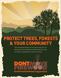 'Don't Move Firewood' campaign