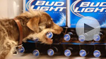 Bud Light: 'Rescue Dog' Super Bowl spot