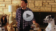 Bud Light 'Dog Sitter' Super Bowl spot