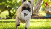 Doritos 'Pug Attack' Super Bowl spot