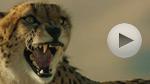 Hyundai: 'Cheetah'