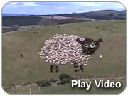Samsung: Extreme Sheep LED Art